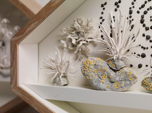 Forth Flora: A Study in Porcelain