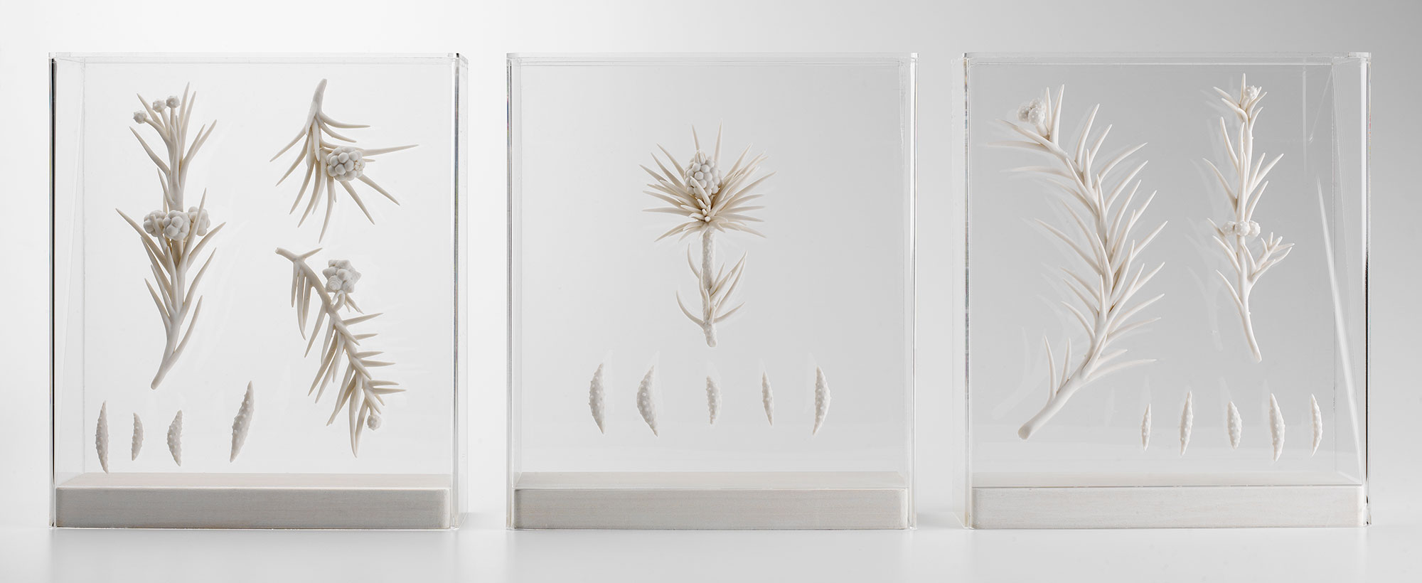 Lorna Fraser, Spirit Collection. Image Shannon Tofts